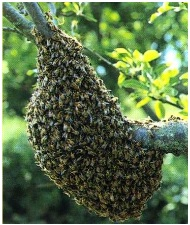 abeilles nu - Having problems with European and Asian hornets, wasps or bees in France?