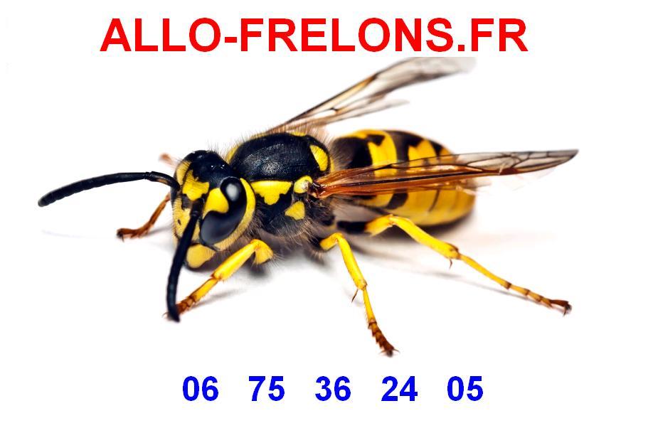 autocollant frelons - Guêpes frelons, ALLO FRELONS, destruction, élimination de nids