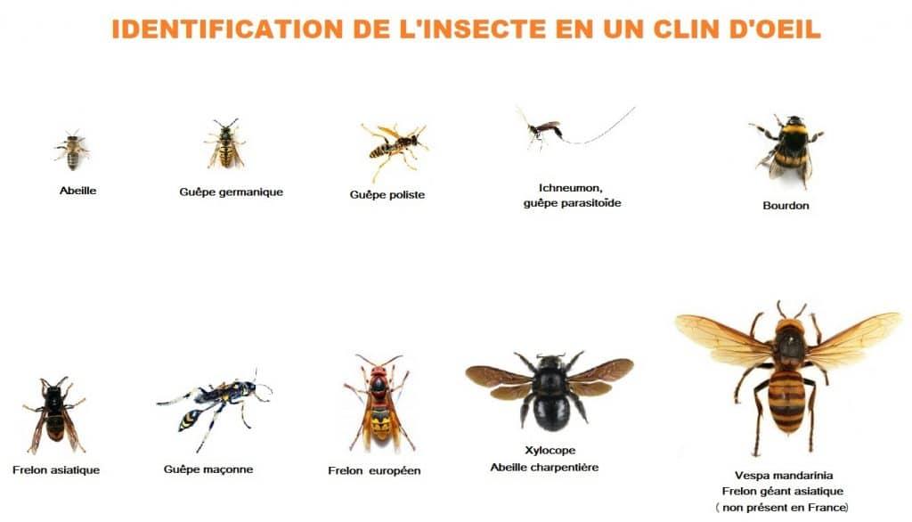 identification 1024x586 - Guêpes frelons, ALLO FRELONS, destruction, élimination de nids