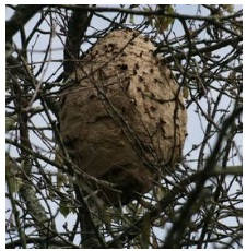 image 17 - Having problems with European and Asian hornets, wasps or bees in France?