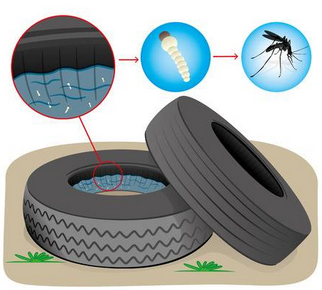 image - Comment limiter le moustique tigre