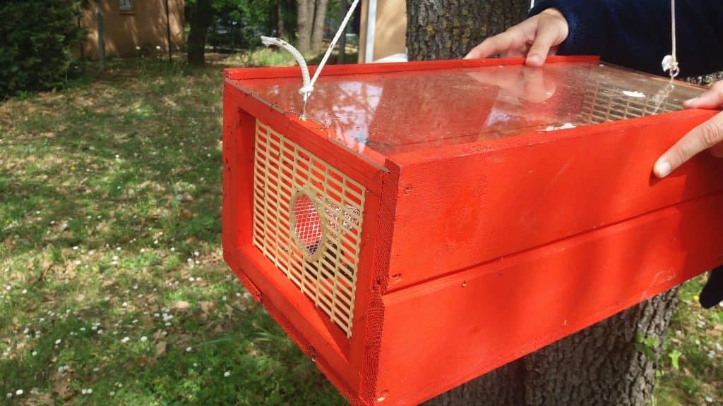 piègeage 1 1024x576 - Que deviennent les nids de frelons asiatiques l'hiver ?