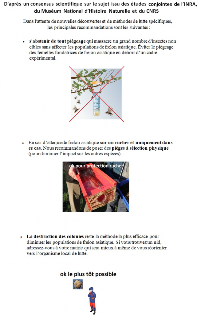 image 1 654x1024 - Préconisations Muséum d'Histoires Naturelles, piégeage du frelon asiatique