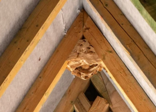 image 6 - Frelons Villeneuve sur Lot entreprise qui détruit les nids