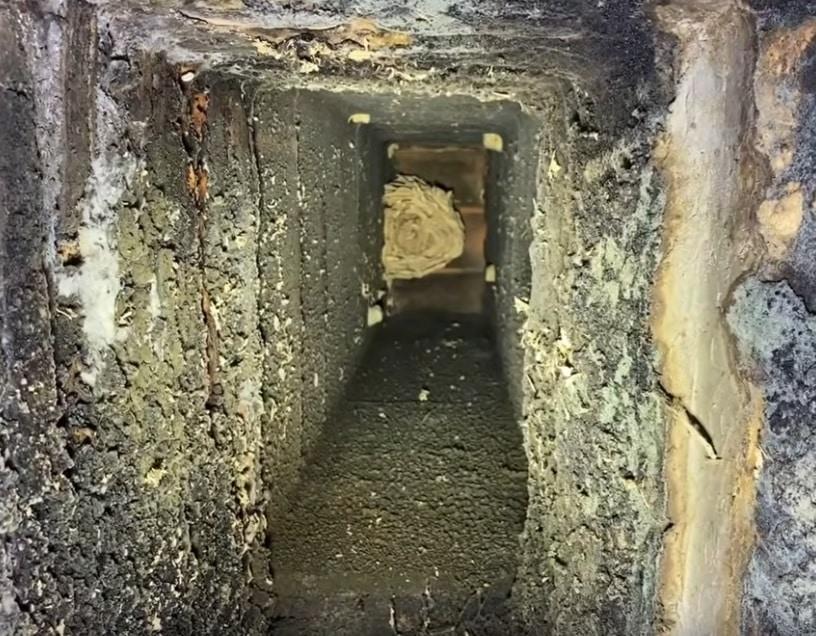 chemineedessous - Frelons dans cheminée, comment réagir?